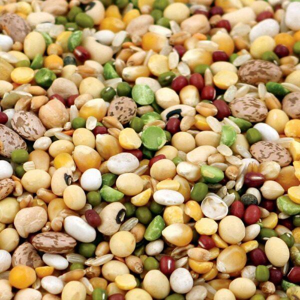 Микс за папагали- накисване и готвене-Tidymix – НАСИПНО- 1 кг Храни и лакомства Храни за големи папагали Семена за покълване и варива Храни за малки и средни папагали Семена за покълване и варива Насипни храни Насипни Храни за големи папагали Насипни Храни за малки папагали Всички продукти
