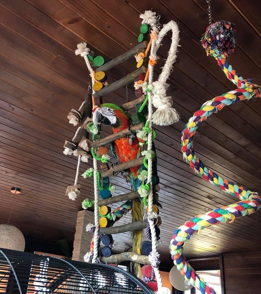 Джунгла – въжена стълба с дърво -95 см. за-Ара, Какаду Играчки Големи видове папагали Играчки Оборудване-Аксесоари Всички продукти