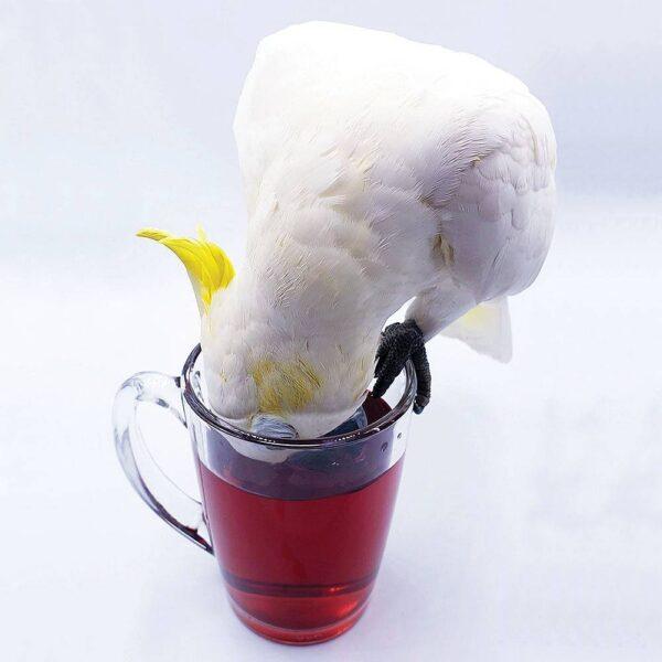 Чай за папагали – Органичен билков птичи чай – 50g Храни и лакомства Лакомства - Яйчни храни и Други Лакомства и Други Витамини-Минерали и Добавки Всички продукти