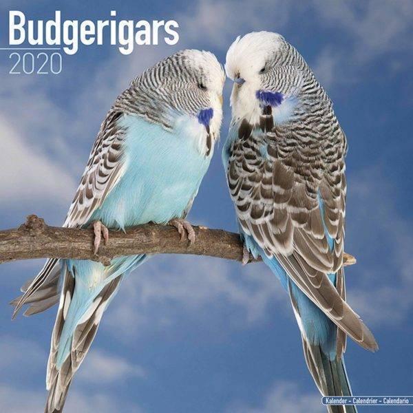 Календар вълнисти ПАПАГАЛИ 2020 г. Вани и др. Аксесоари Оборудване-Аксесоари Всички продукти