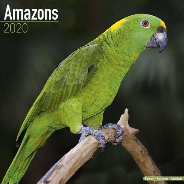 Календар папагали Амазона 2020 г. Вани и др. Аксесоари Оборудване-Аксесоари Всички продукти