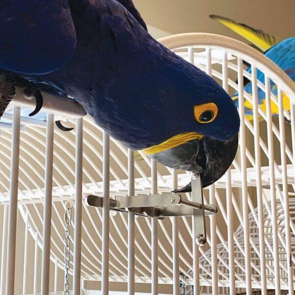 Играчката за папагали Spinner Играчки Играчки - Големи видове папагали Играчки - Средни и Малки папагали Всички продукти