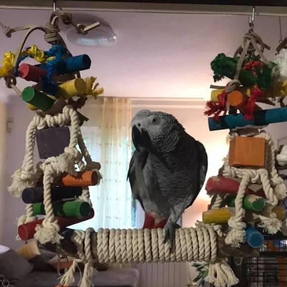 Люлка за папагали- Средно голяма-VSL8 Всички Играчки Играчки - Големи видове папагали Оборудване-Аксесоари Кацалки Всички продукти