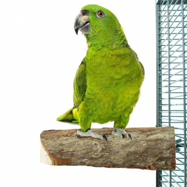 Дървена кацалка за папагали – натурална